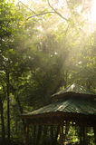 Green forest with ray of lights Royalty Free Stock Photo
