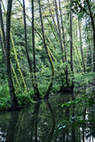 Green forest is reflected in water, seasonal natural scene, cold. Green forest is reflected in water. Seasonal natural scene. Vertical composition. Cold photo Stock Photos
