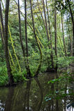 Green forest is reflected in water, seasonal natural scene, vert. Green forest is reflected in water. Seasonal natural scene. Vertical composition. Wildlife Stock Image