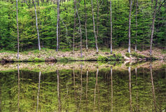 Green forest is reflected in water, seasonal natural scene. Green forest is reflected in water. Seasonal natural scene. Wildlife theme. Reflecting greenery Royalty Free Stock Photography