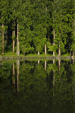 Green forest in reflection Stock Photo
