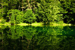 Green Forest Reflection in the Lake Royalty Free Stock Photos
