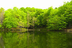 Green forest reflection on water stock images