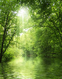 Green forest Royalty Free Stock Photos
