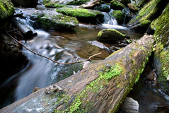 Green forest and river Stock Photo