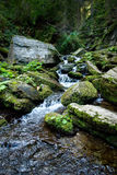Green forest and river Royalty Free Stock Images