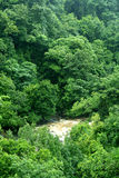 Green forest and river Royalty Free Stock Image