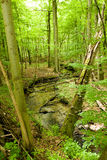 Green forest with a river Stock Photo