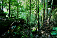 Green Forest and River stock images