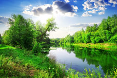 Green forest on river Stock Photography