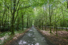 Green Forest Road Trees Royalty Free Stock Photography