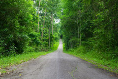 Green forest and road Royalty Free Stock Photography