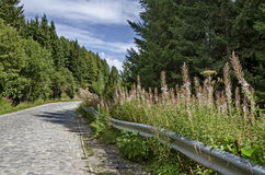 Green forest  and road  with high wild grass and mountain purple flowers toward the top of  Vitosha mountain Stock Images