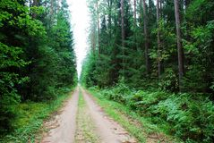 Green forest and road at summer time Stock Photos