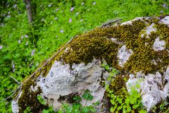 Green forest, rock. Beautiful green forest, Dense mountain wood Stock Photography