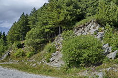 Green forest on  rocky  hill  and road near by hija or rest-house Aleko in Vitosha mountain Stock Photos