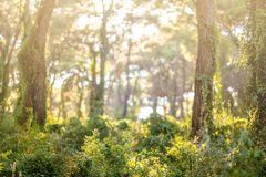 Green Forest Scenery with sun light. Nature Landscape. royalty free stock images