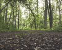 Green forest seen from ground level stock image