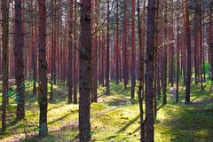 Green forest with shadows from sun royalty free stock images