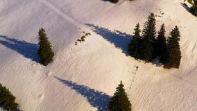 Green forest and snowy mountains, aerial winter scene stock footage