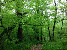Green forest in Sochi Stock Photos