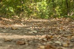 Green forest soil dirty path for walking and running lane. Close royalty free stock images