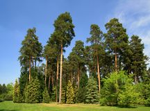 Green  forest on spring Royalty Free Stock Images