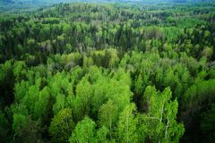 Green forest in spring royalty free stock image