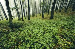 Green forest in the spring royalty free stock image