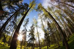 Green forest in spring Stock Photography