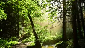 Green forest with brook and sun stock photos