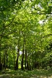 Green forest. In spring time Royalty Free Stock Photography