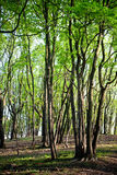 Green forest in springtime Stock Photo