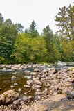 Green forest with stones and boulders in river during summer sea royalty free stock images