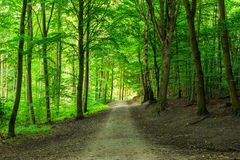 Green forest with straight pathway in beautiful green colours. Royalty Free Stock Photos