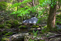 Green Forest and Stream. A stream flows through the green foliage of Stokes State Forest in New Jersey during late Spring, early Summer Stock Photography