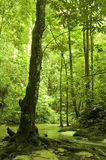 Green forest and stream Royalty Free Stock Photo