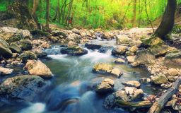 Green Forest Stream Stock Photo