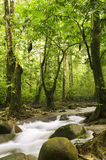 Green forest and stream Stock Photos
