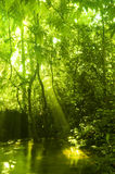 Green forest and stream. In a morning, with golden sunlight shine on the water Royalty Free Stock Photography