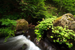 Green forest stream Royalty Free Stock Photo