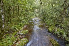 Green forest with stream in Muniellos biosphere reserve. Spain. Green forest with stream in Muniellos biosphere reserve, Asturias. Spain stock image