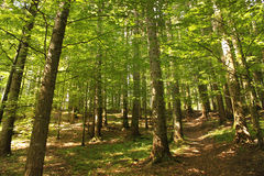Green forest in the summer Stock Images