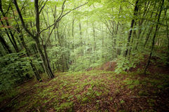 Green forest in summer Stock Images