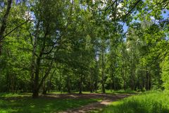 Green forest in summer stock image