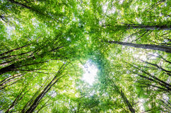 Green forest during  summer day Royalty Free Stock Photography