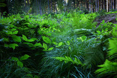 Green forest in summer day. Many herbs and plants royalty free stock photos