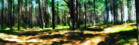 green forest in the summer Royalty Free Stock Photo