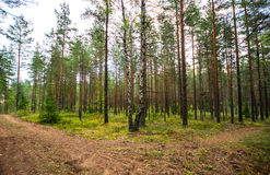 Green forest, summer time Stock Photos