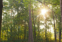 Green forest with sun beam Stock Image